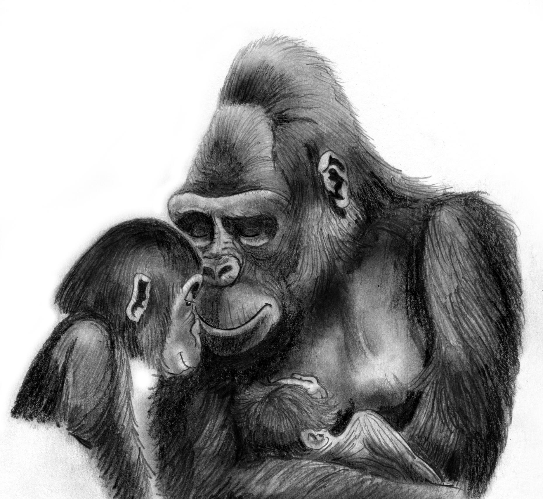 gorilla_baby.jpeg