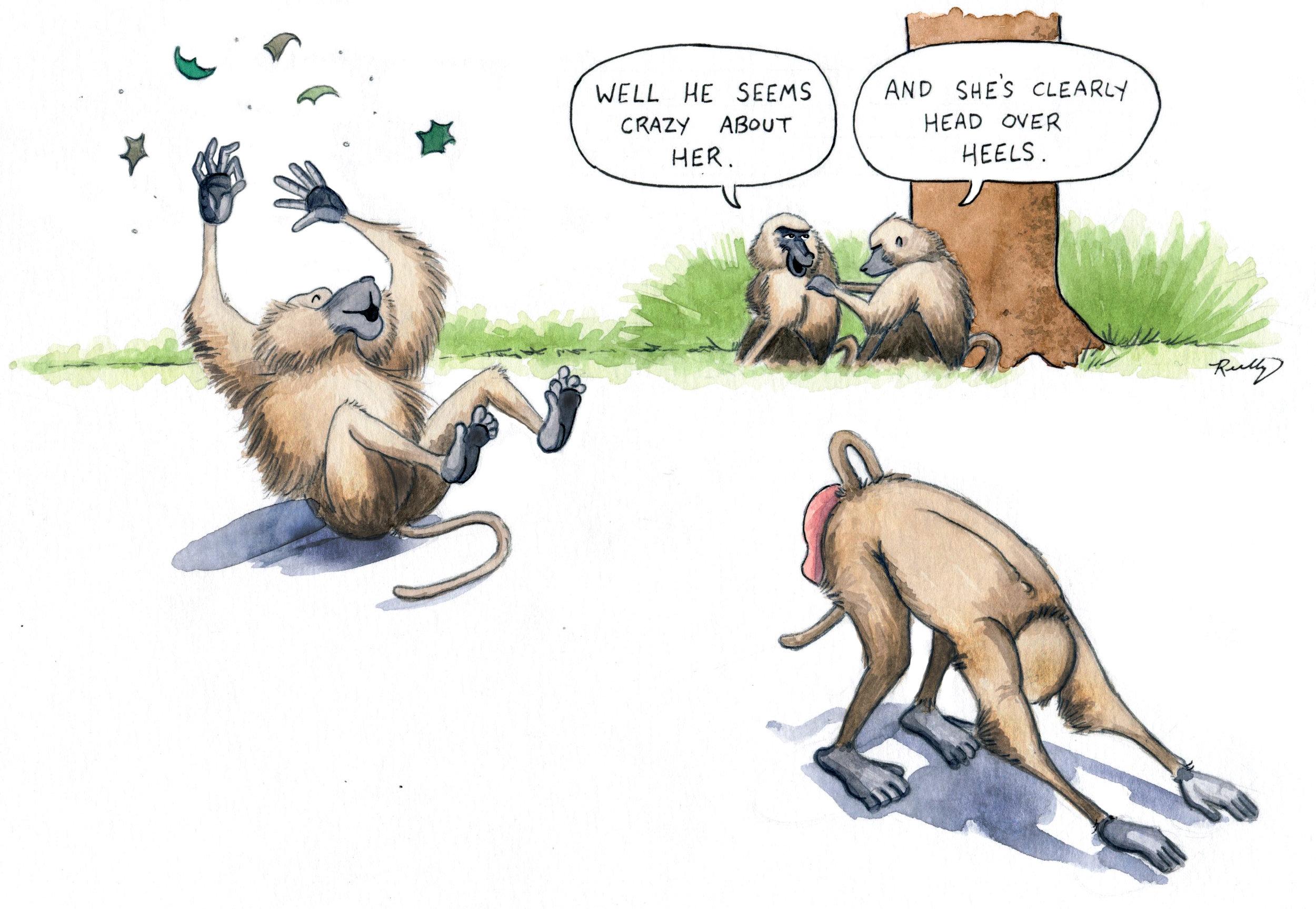 baboons_web.jpg
