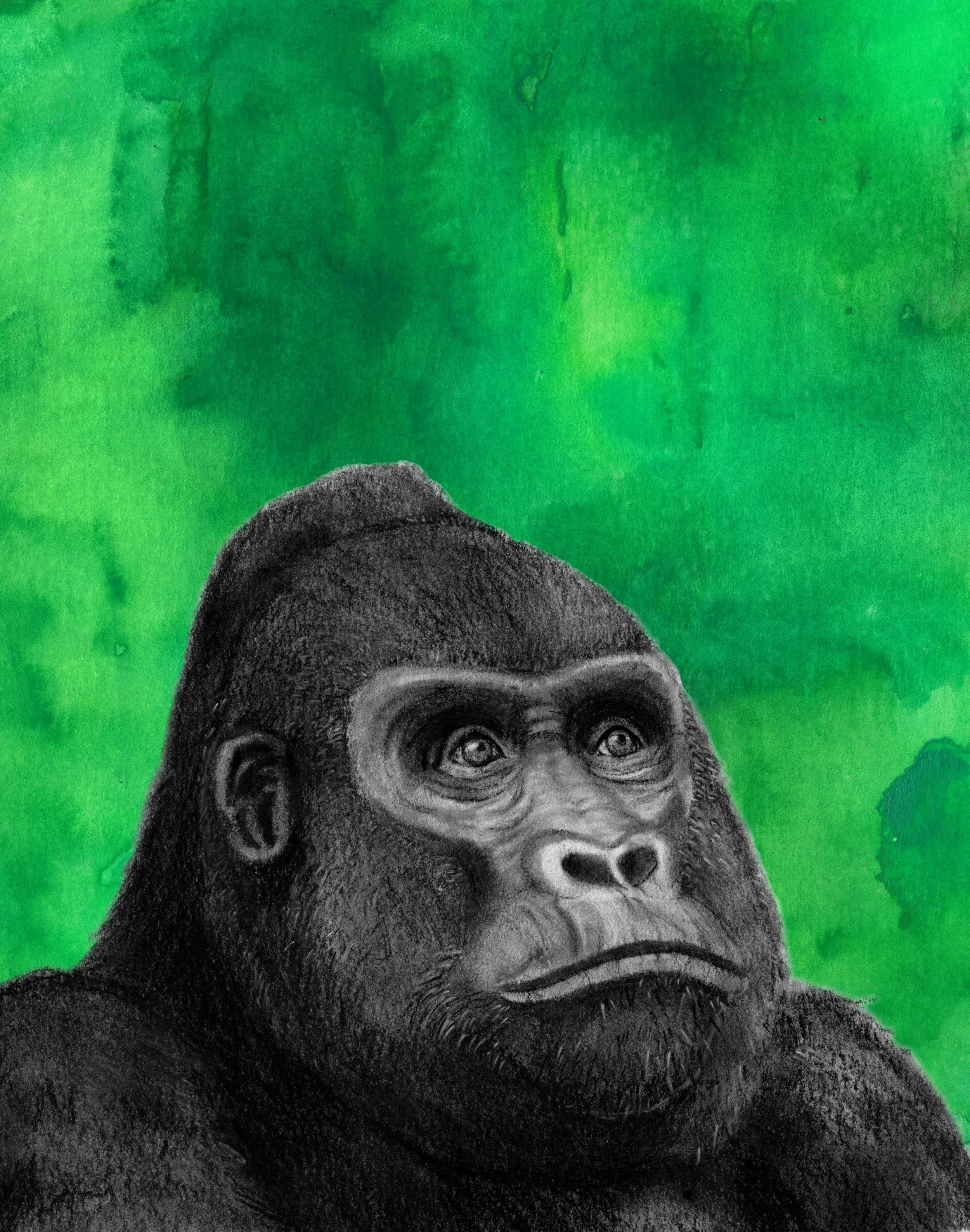 Gorilla_jungle_web.jpg