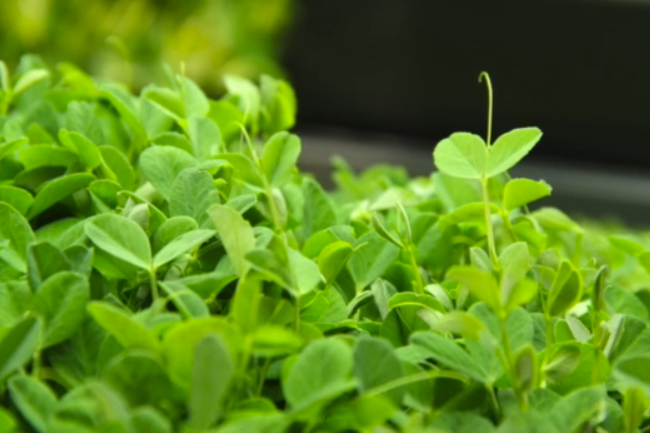 Edenworks, A Stacked Farming Venture, Grows in Industrial Brooklyn - Edible Brooklyn
