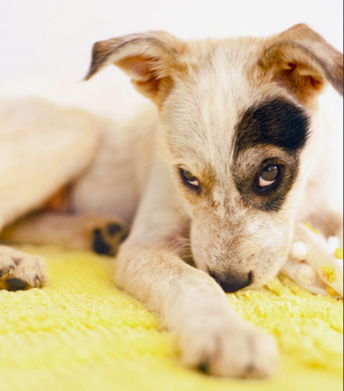 eye patch puppy.jpg