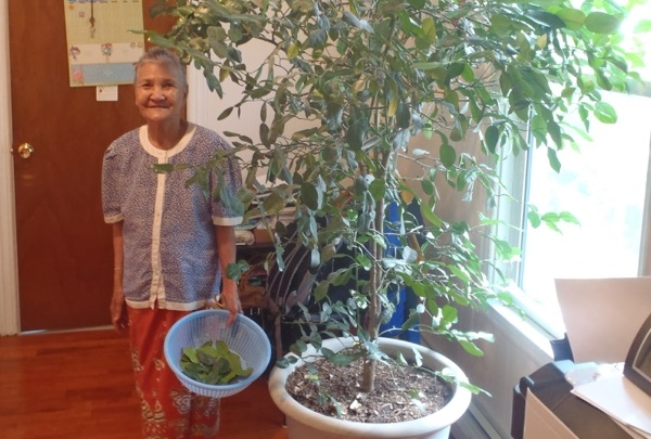 Makara and her mom keep a kaffir lime plant in their living room so they can pick fresh leaves when they need them.