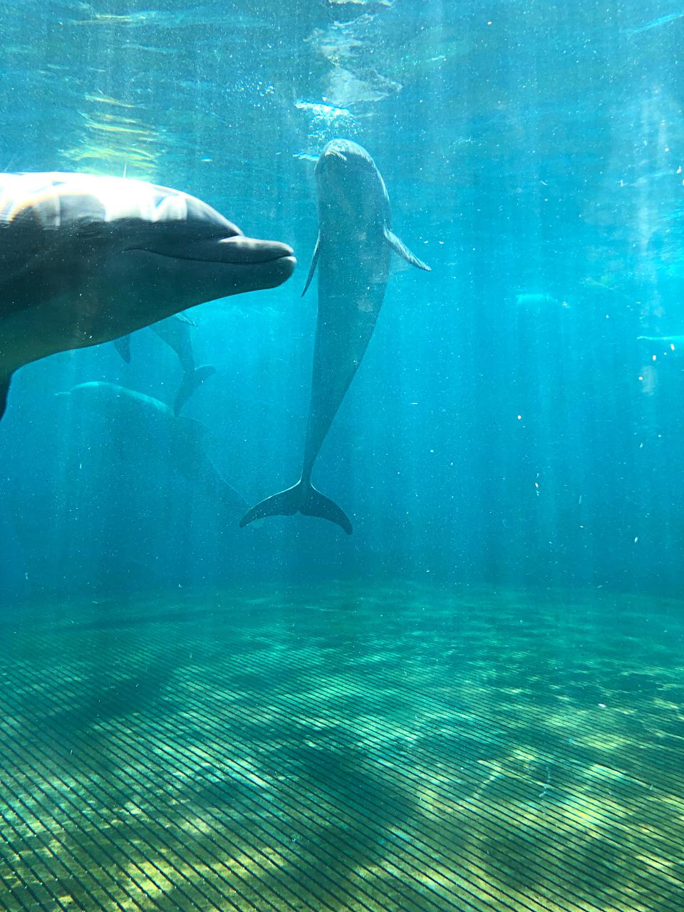 Annie R Morgan Summer 2019 Aquarium 4.jpg