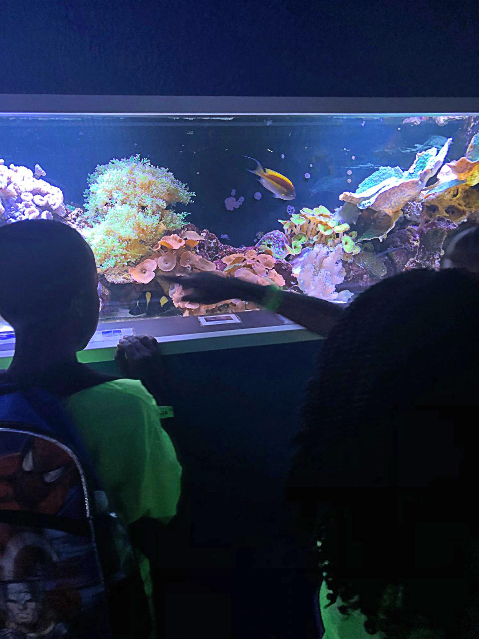 Annie R Morgan Summer 2019 Aquarium 7.jpg