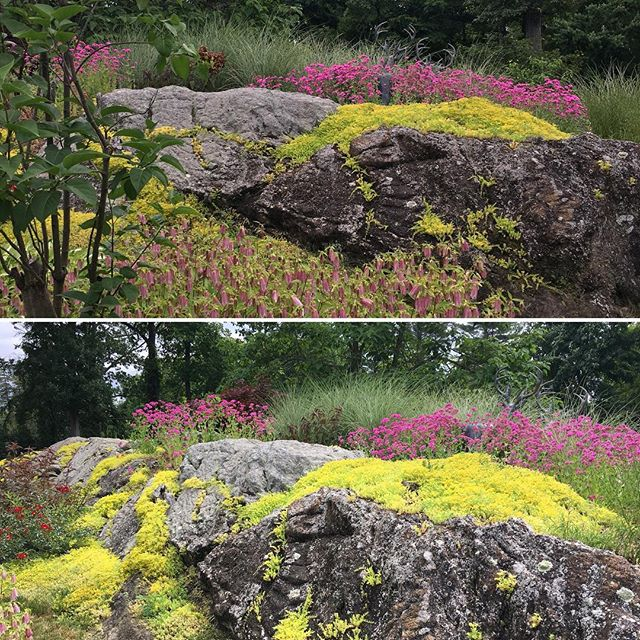 Nothing like native stone, native sedum, and self seeding perennials. #chappaqua #landscapearchitecture