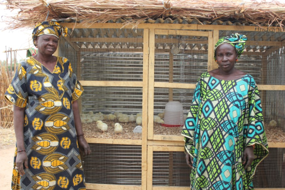 Some of the women with a new batch of chicks at the small coop near their home.