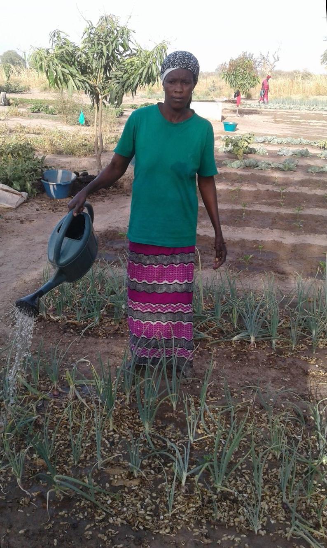 Mbodji watering her onions.