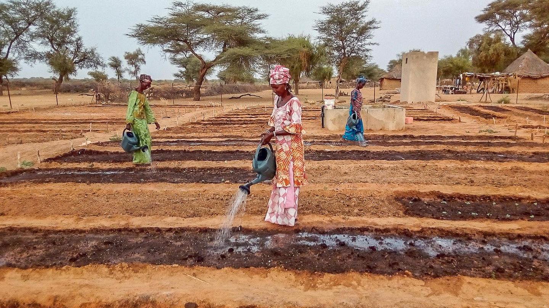 Senegal-6_5d76cd83326256ed16863e7dc49b6122.jpg