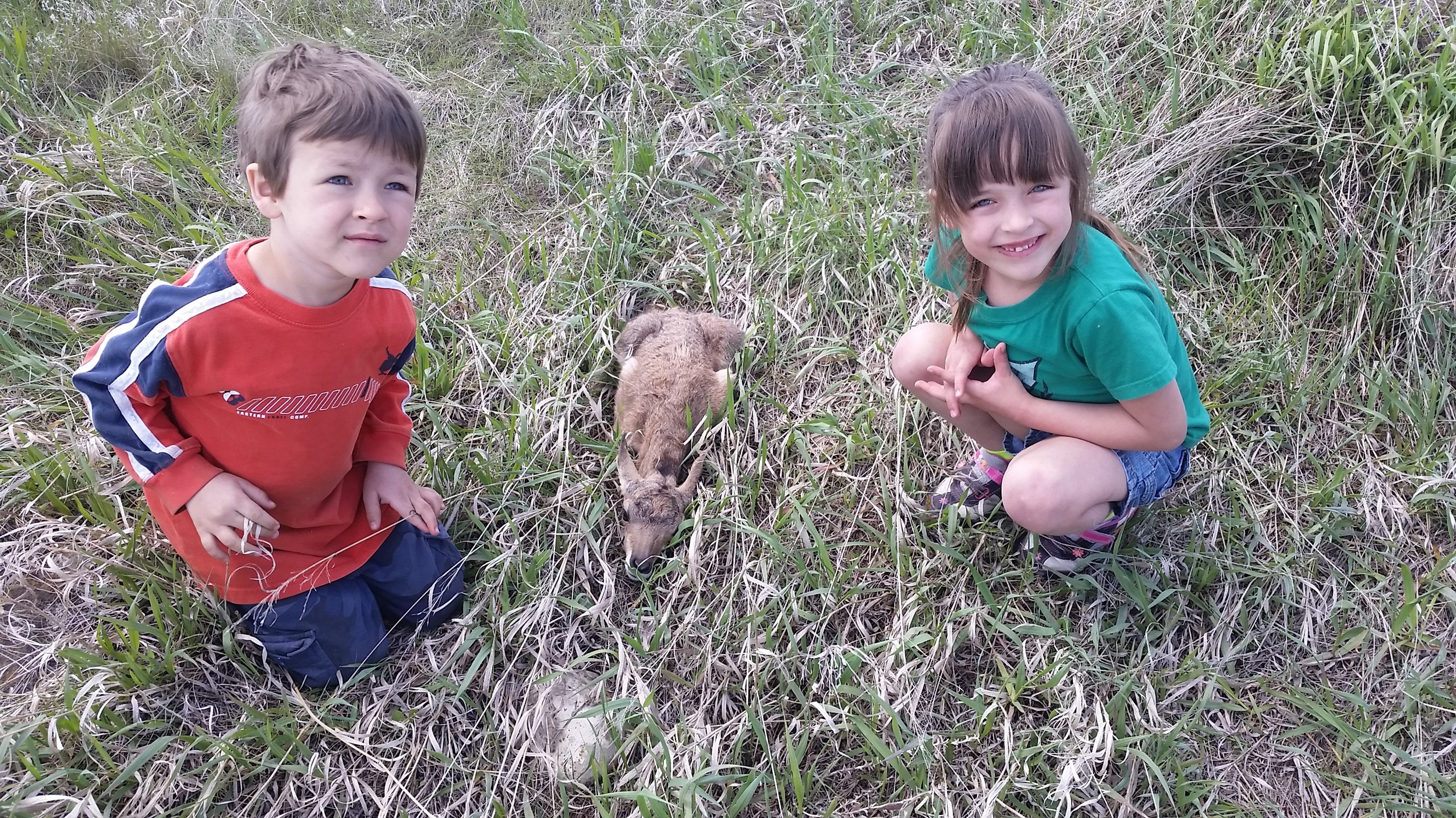 The kids found a baby Antelope on the farm.