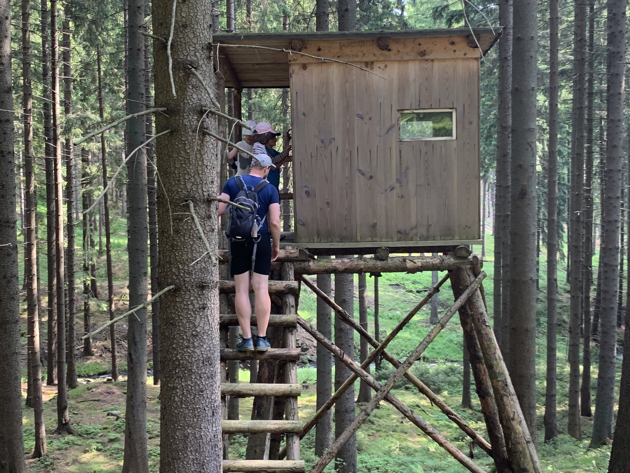 Finding a random lookout point in the woods