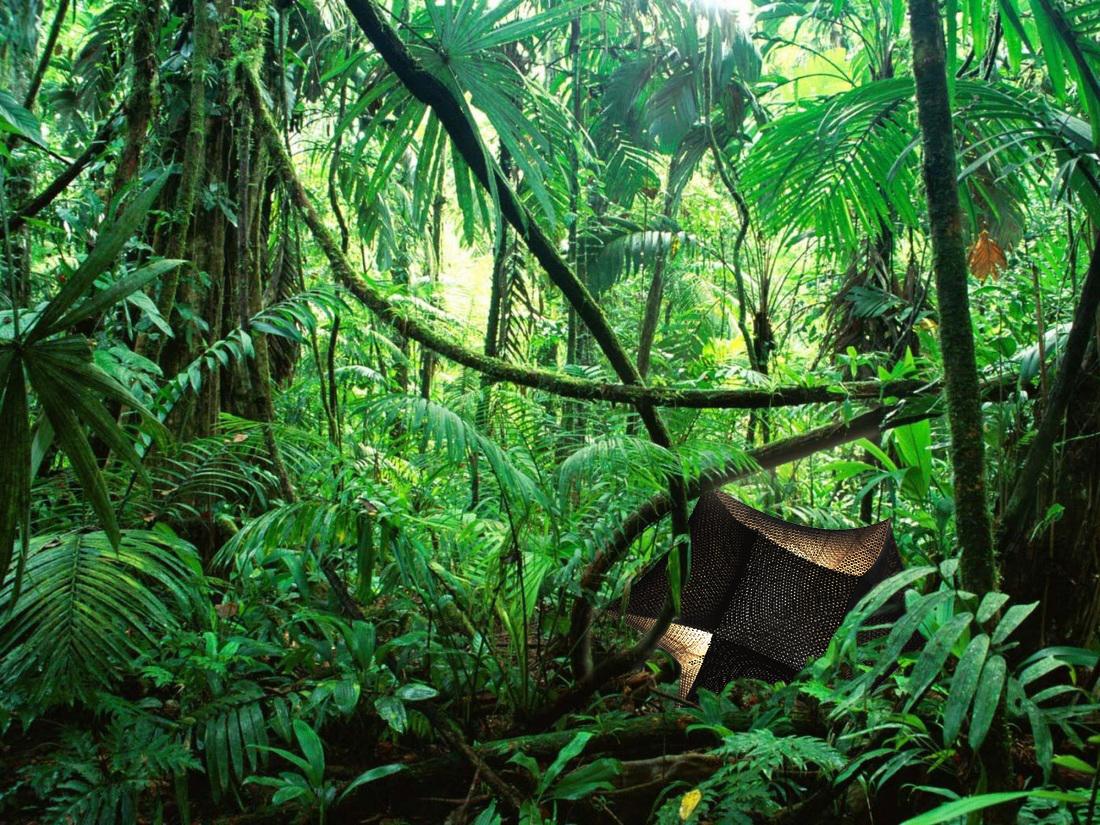 ROLY POLY_Rainforest.jpg