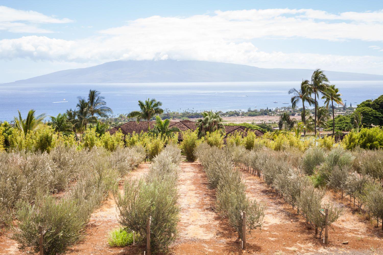 Grown on Maui