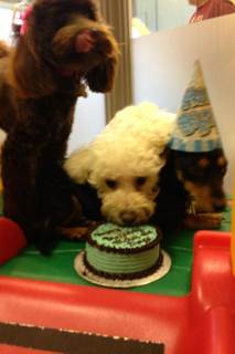 Cheeky Dog Bakery - Happy Canine Customers