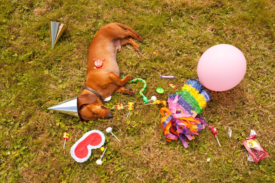 Cheeky Dog Bakery Blog - Cheeky Dog Adventures