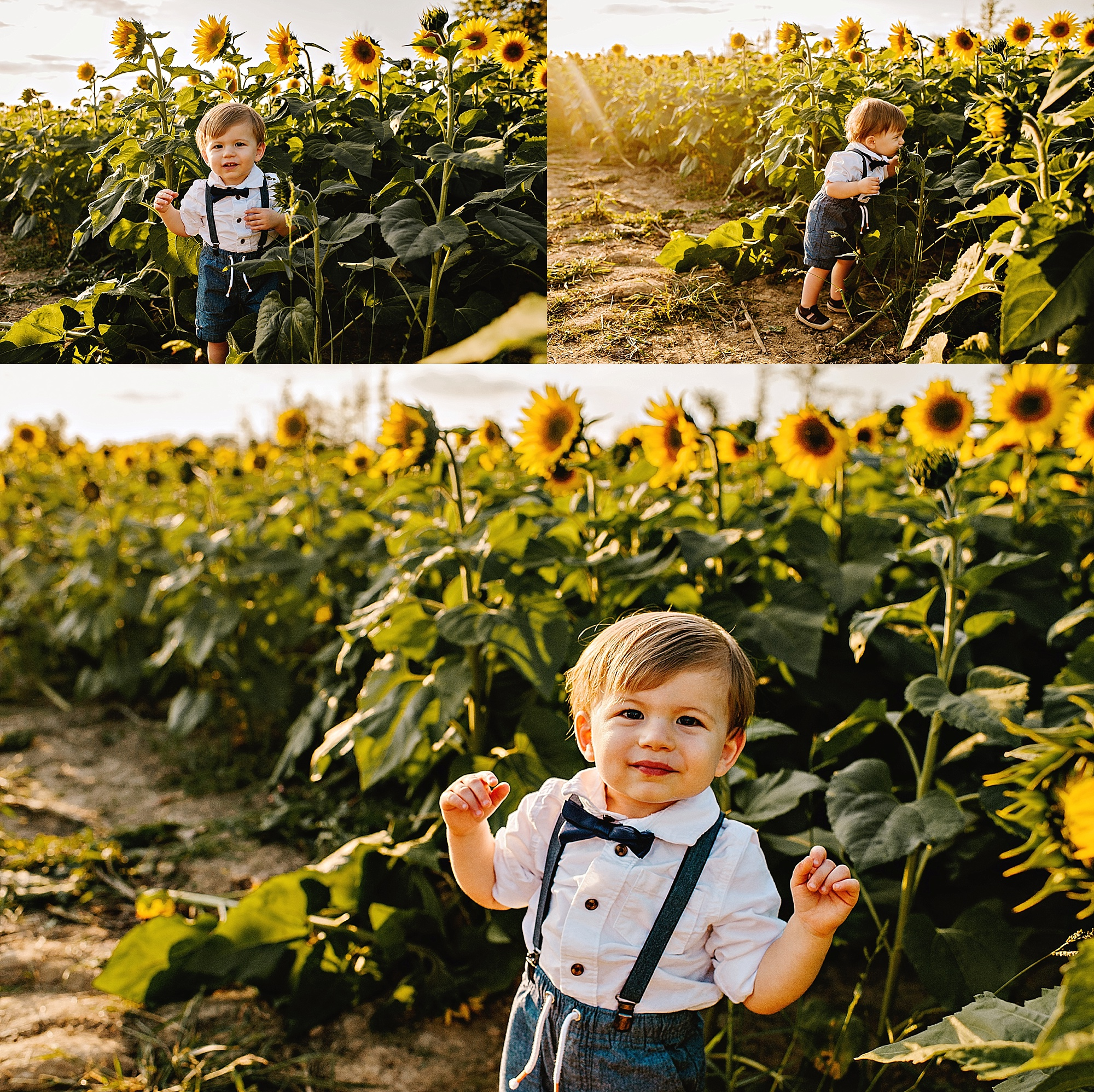 Schreiner-family-lauren-grayson-cleveland-photographer-sunflower-field-session_0002.jpg