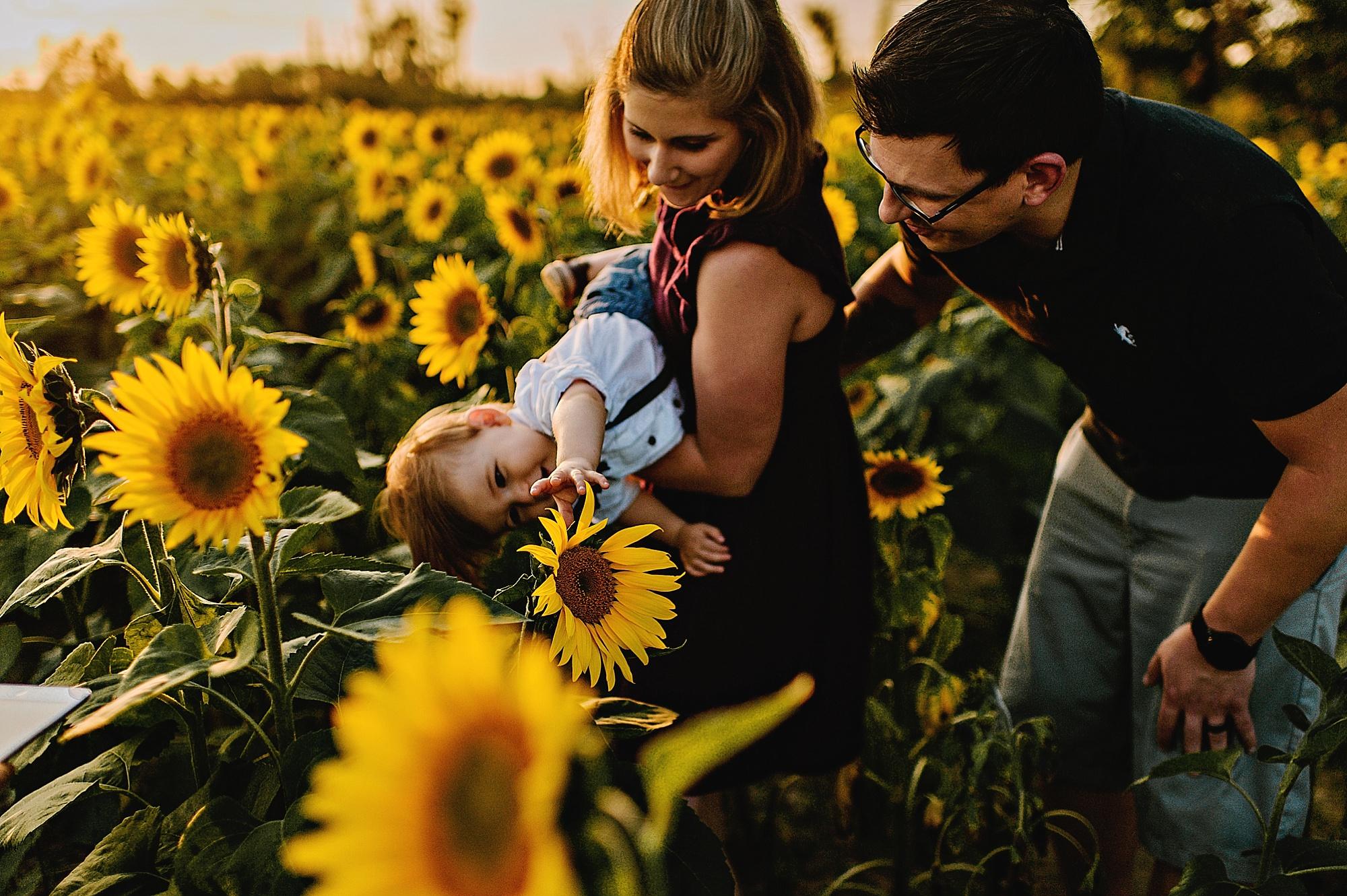 Schreiner-family-lauren-grayson-cleveland-photographer-sunflower-field-session_0025.jpg