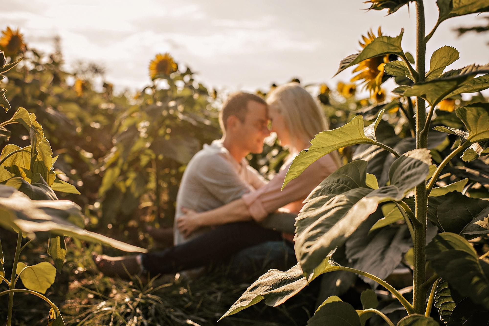 Lori-and-mike-akron-ohio-photographer-lauren-grayson-sunflower-field-session_0015.jpg