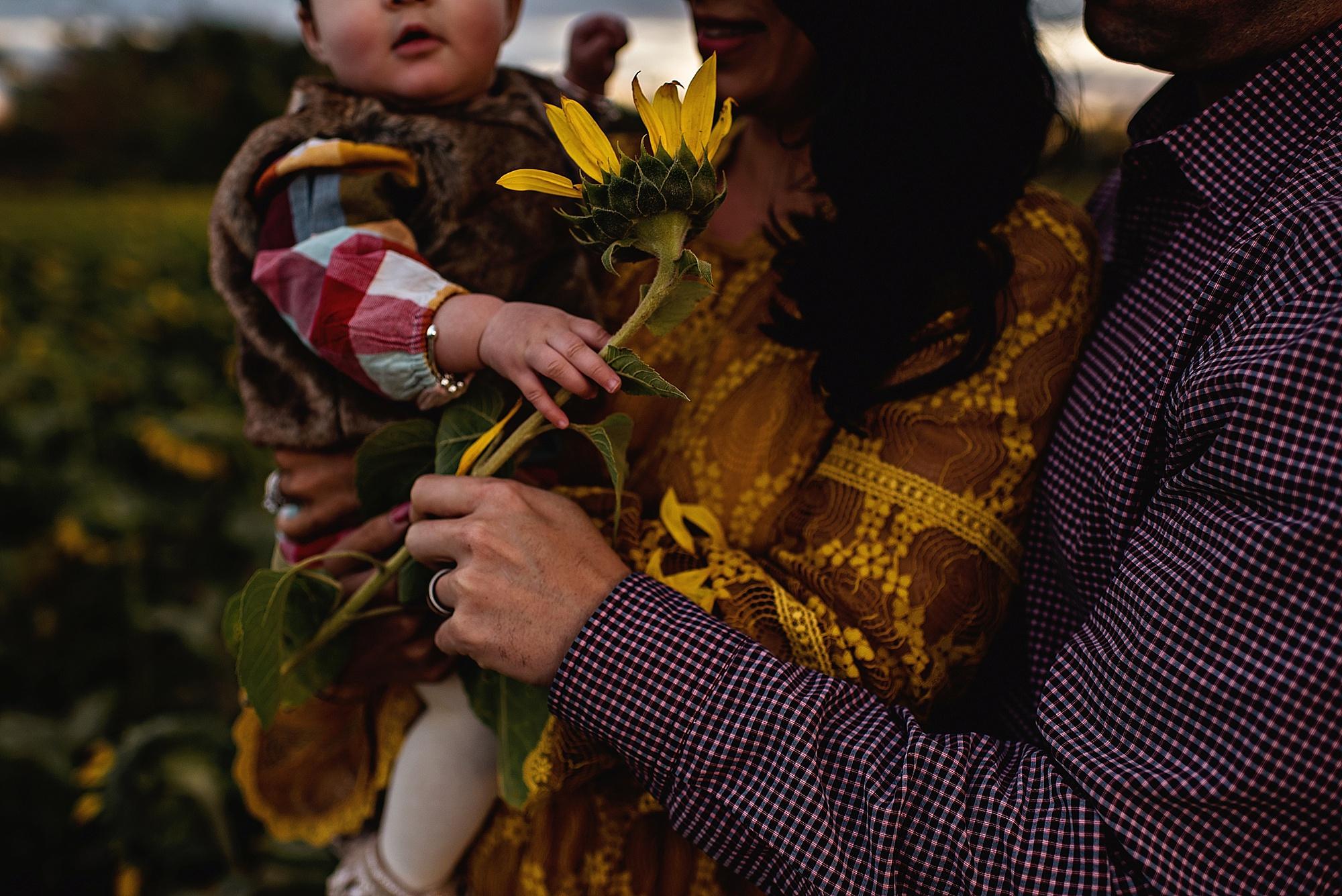 Turner-family-akron-ohio-photographer-lauren-grayson-sunflower-field-session_0023.jpg