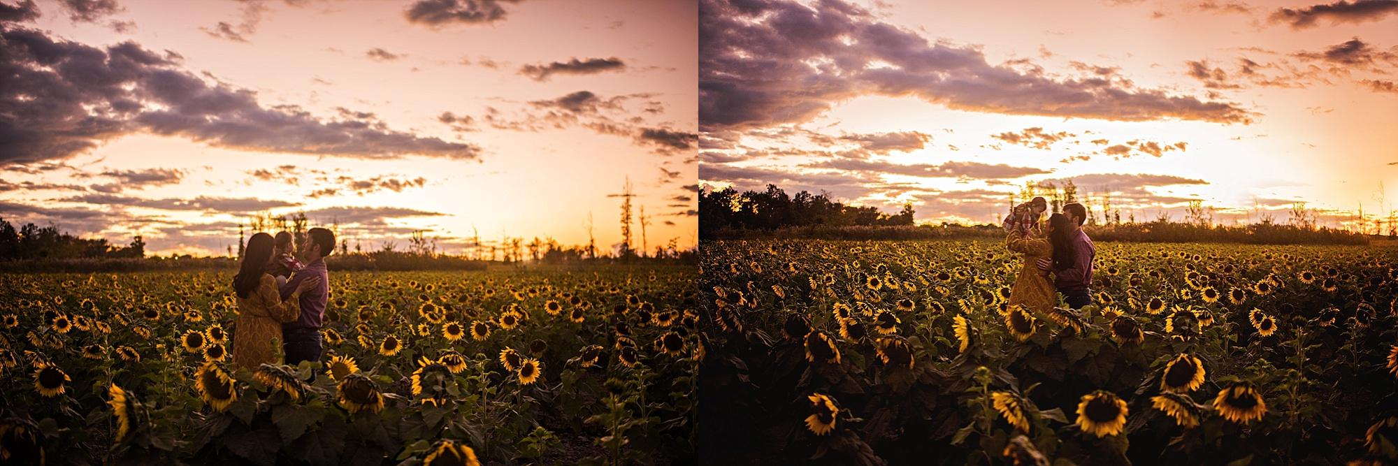 Turner-family-akron-ohio-photographer-lauren-grayson-sunflower-field-session_0030.jpg