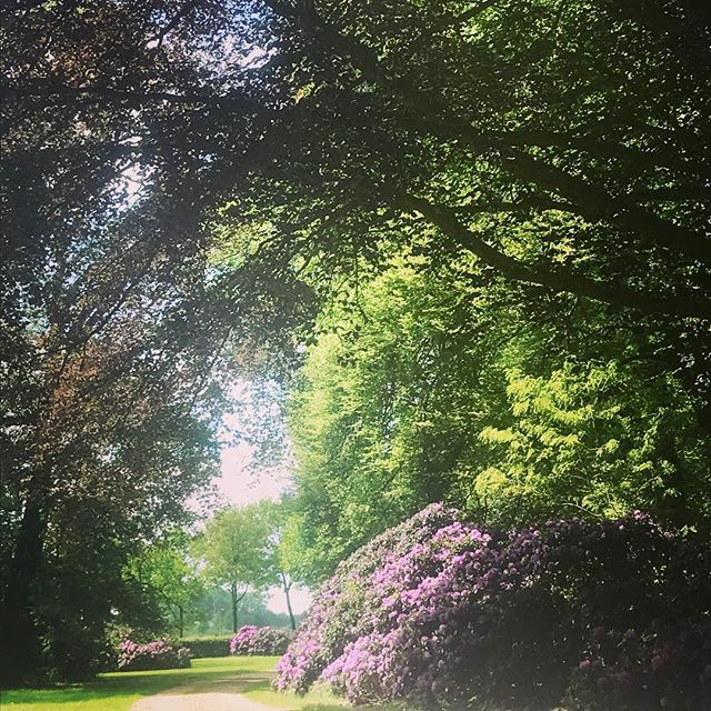 Is ons uitzicht een sprookje of niet? #rododendrons #sprookje #droomtuin