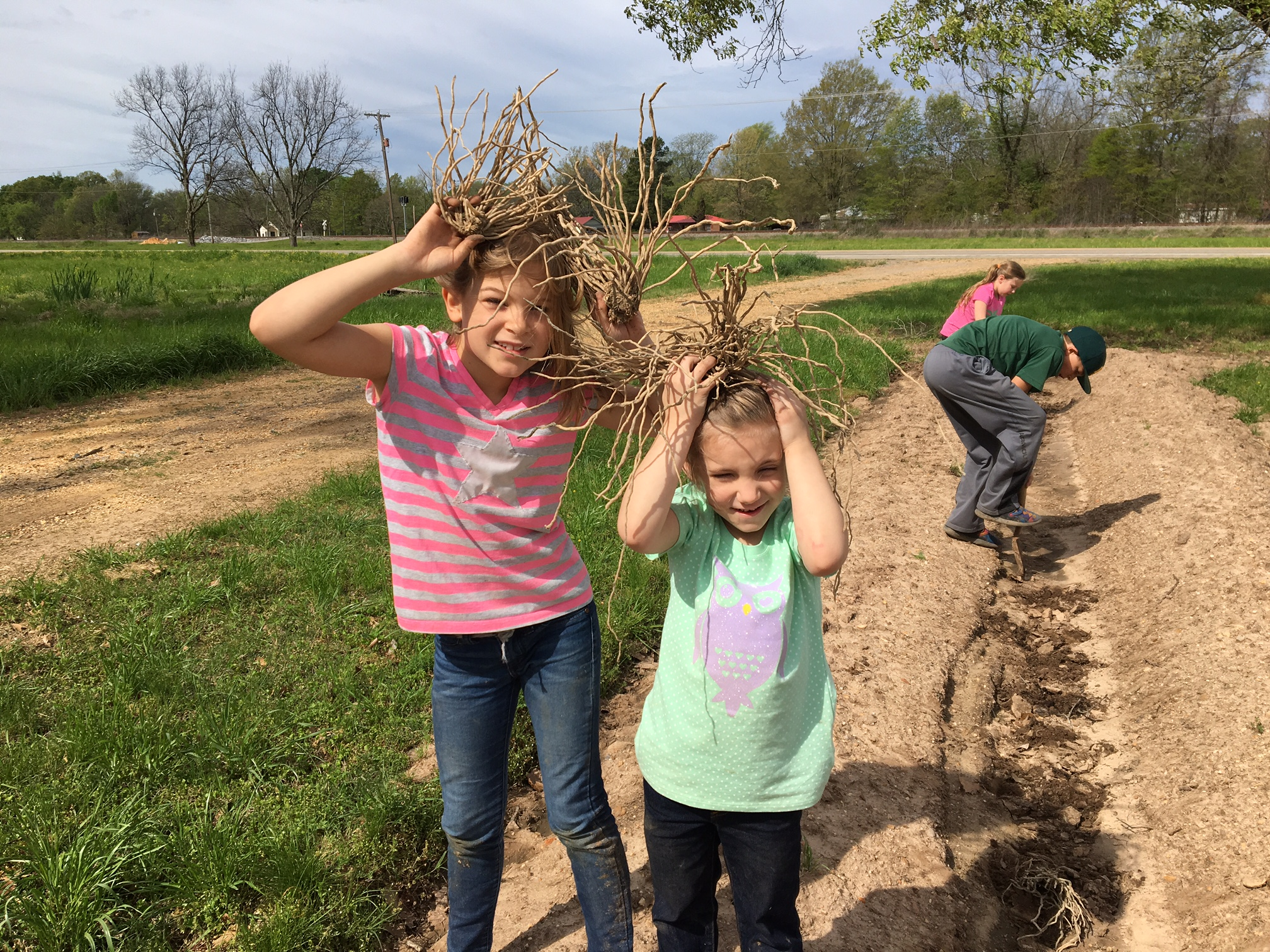 "asparagus ""crowns"" (young plants) for the garden-- some being planting and some being enjoyed"