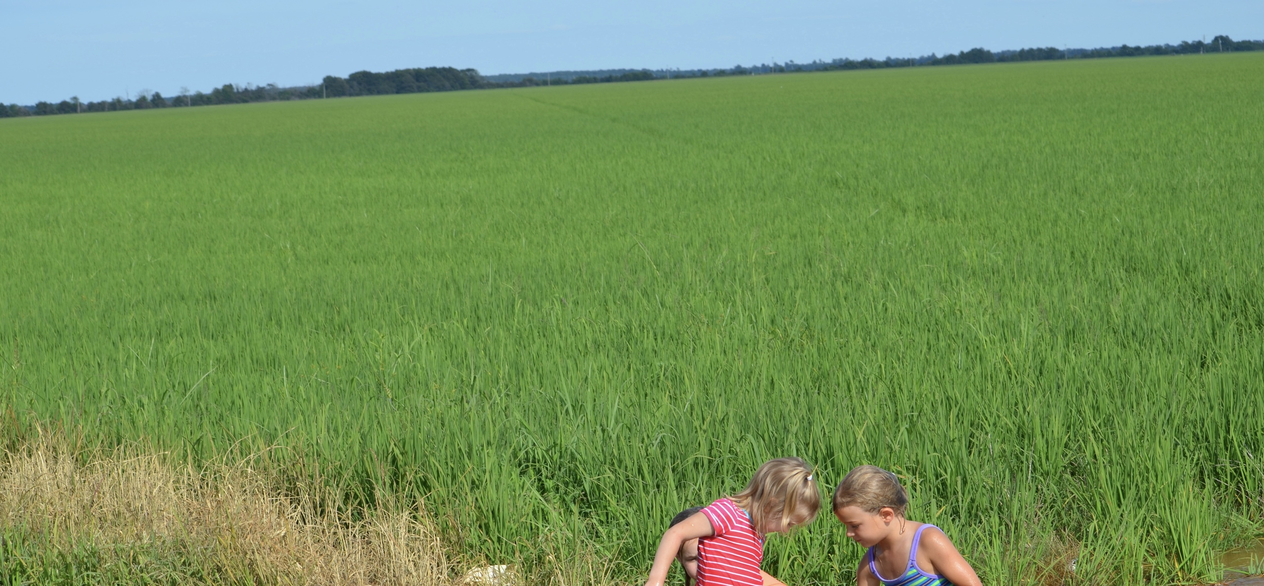 cousins playing in the water of a zero grade rice field