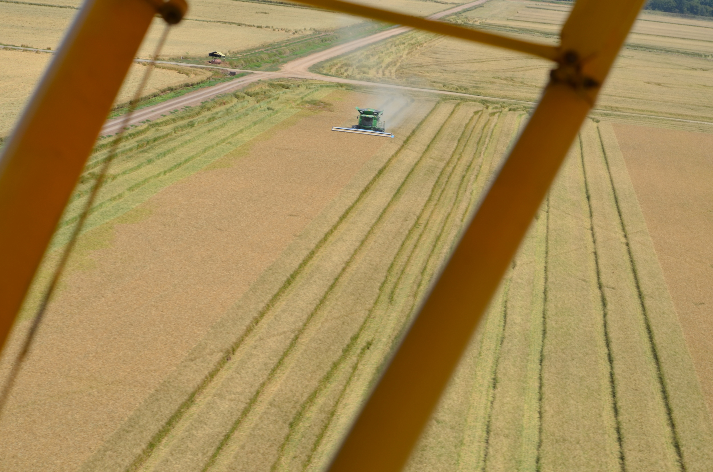 observing our rice harvest from a plane