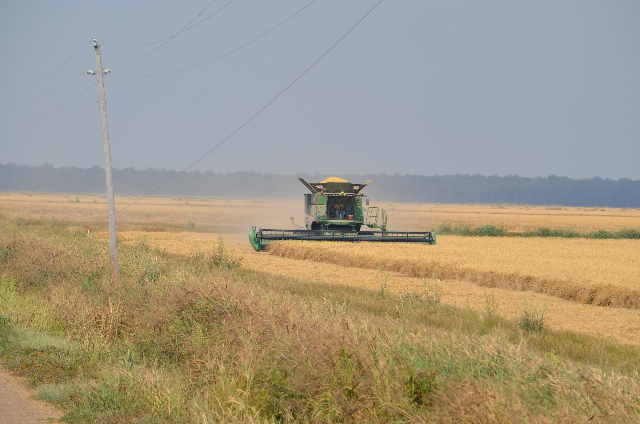 a combine harveting rice