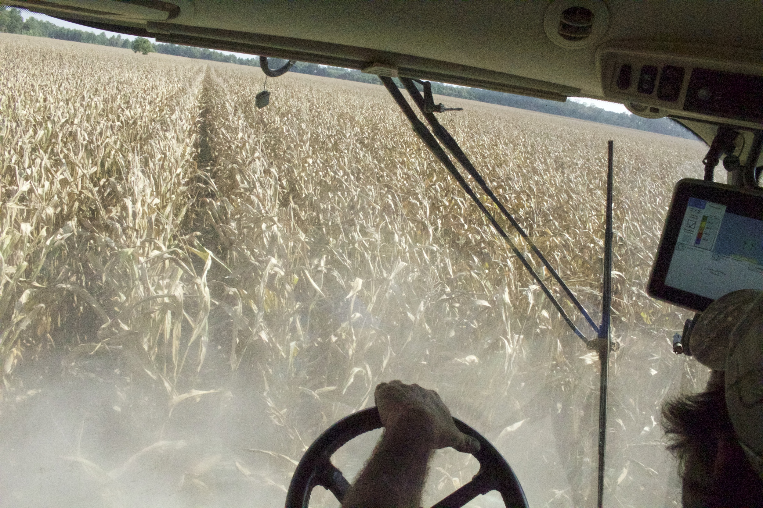 from the cab of a combine harvesting corn