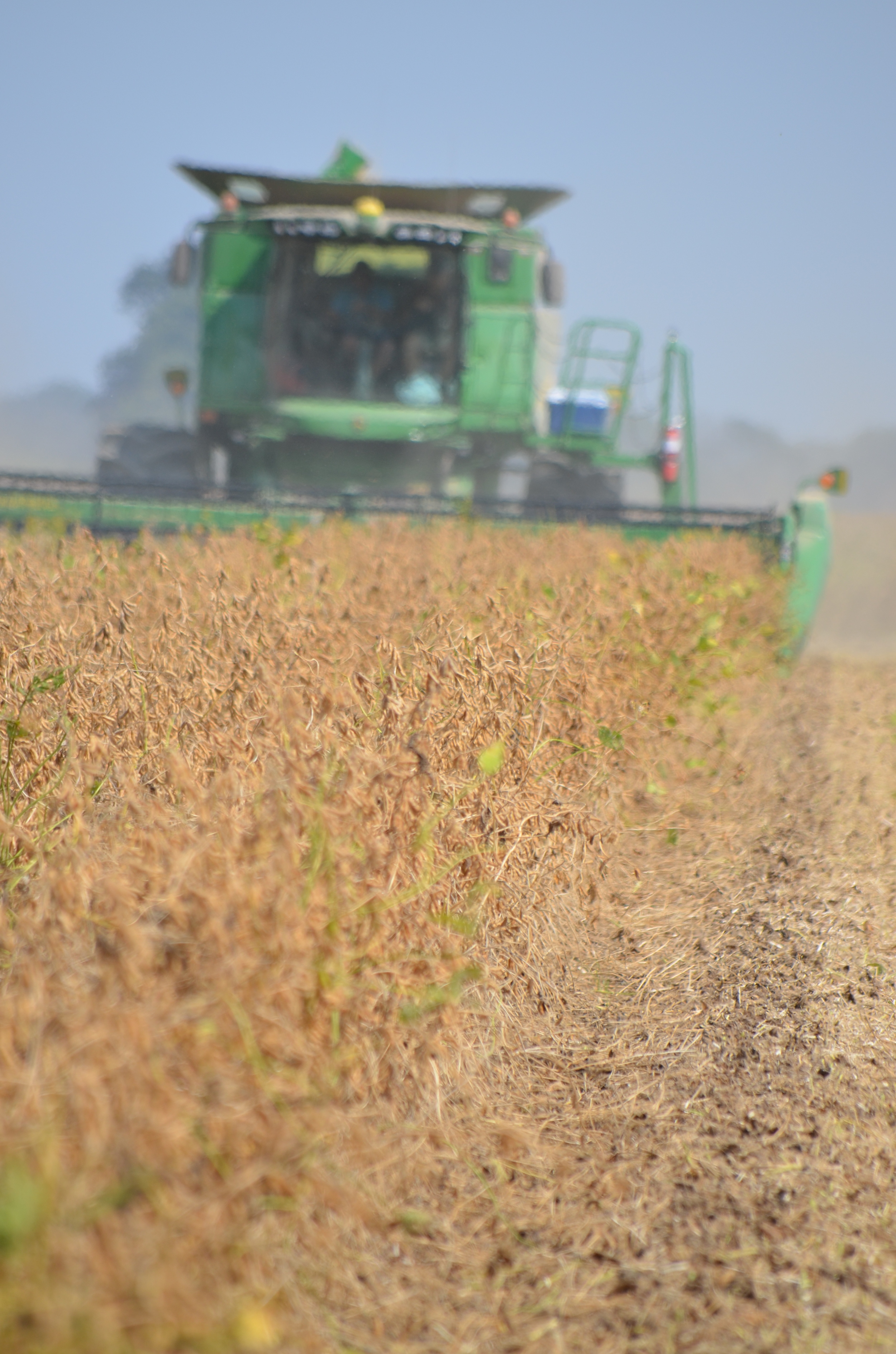 a combine harvesting soybeans