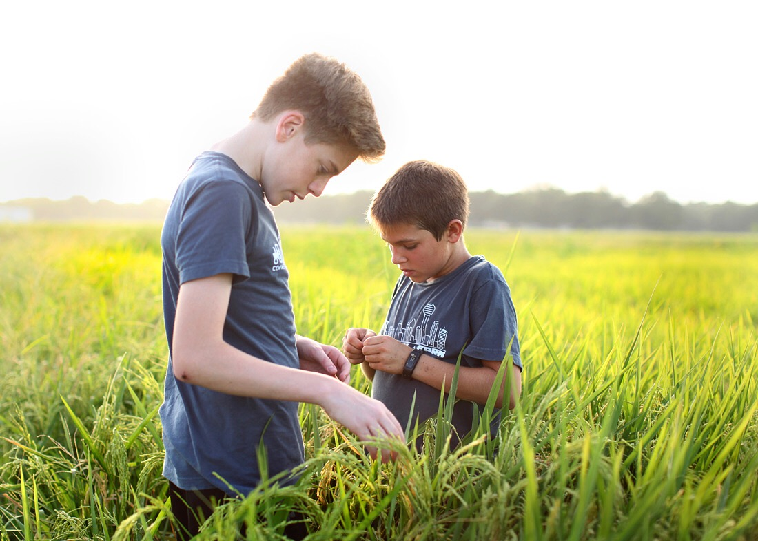 Boys from Dallas explore a rice field in southeast Arkansas and examine the grains.