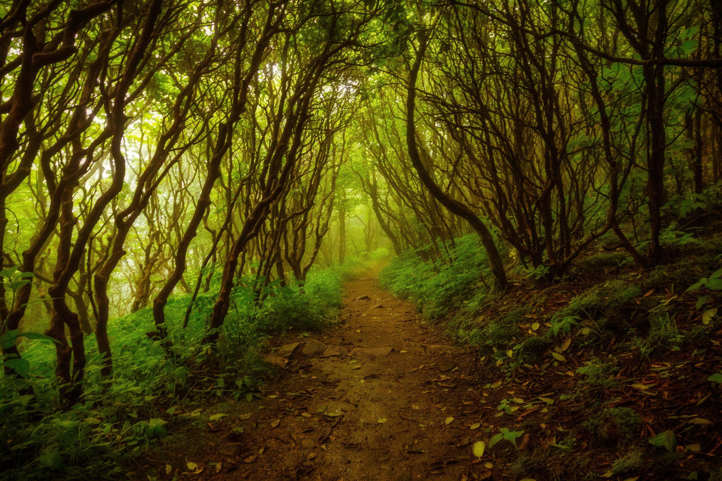 The Misty Craggy Garden