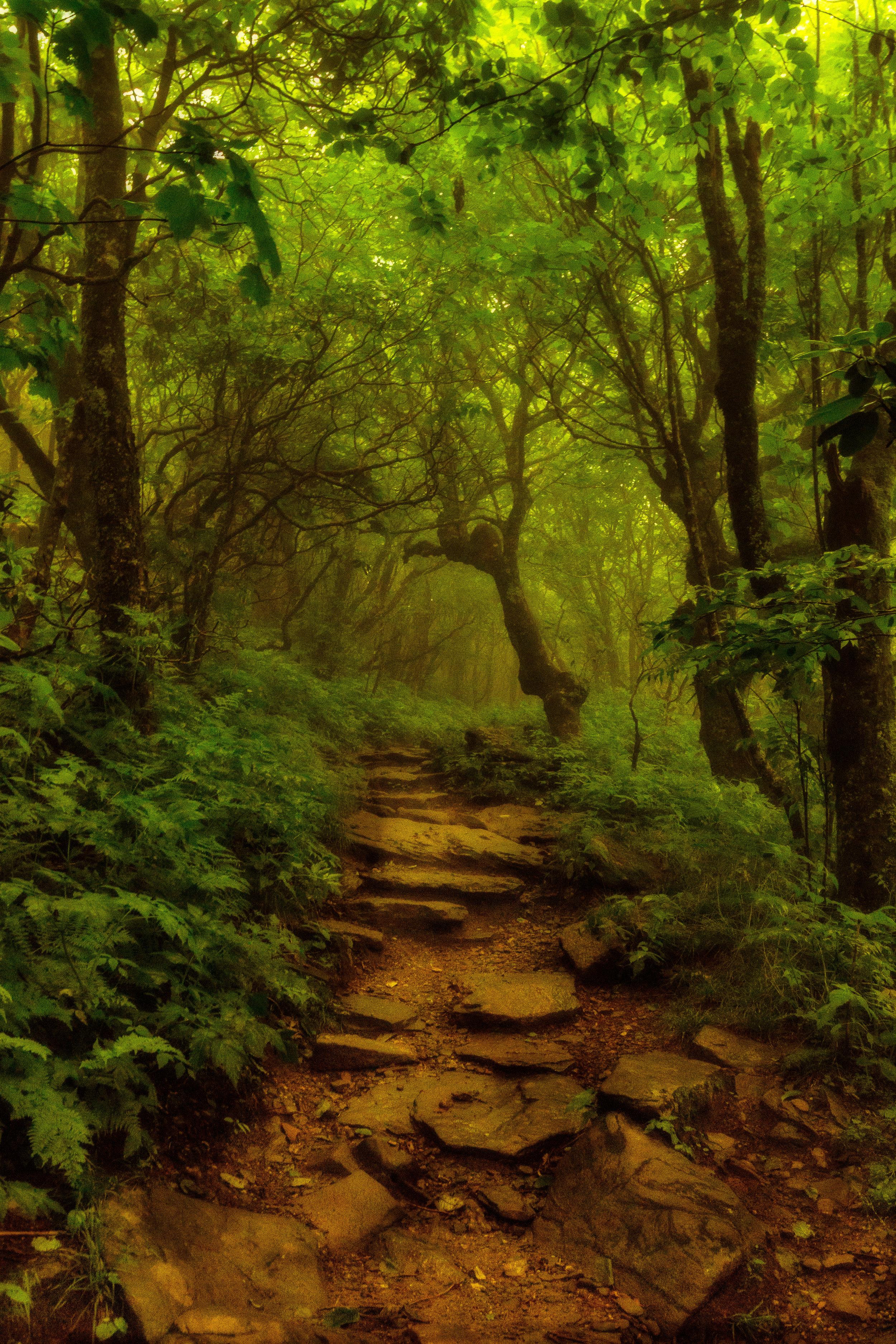 Into the Craggy Garden
