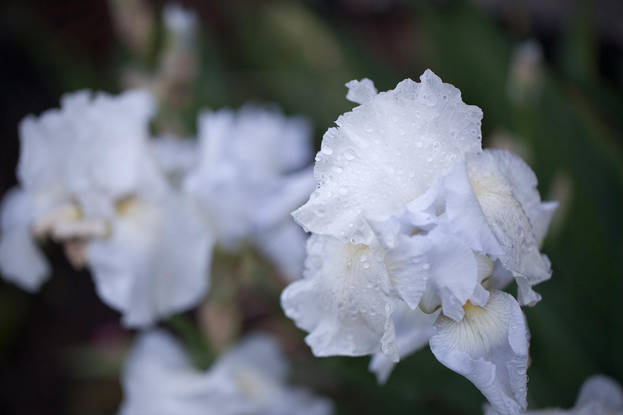 flowers (1 of 6).jpg