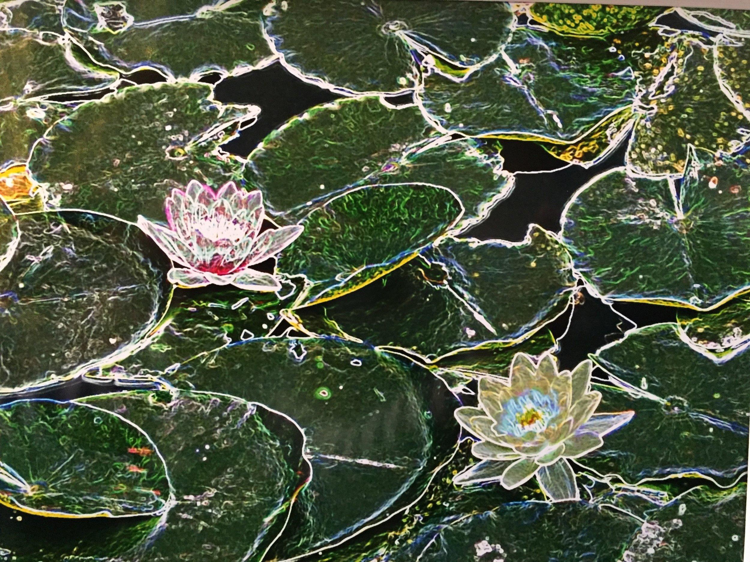 "Photo-edited/photo-artistic winner: Ralph Hamor, ""Water Lilies"""
