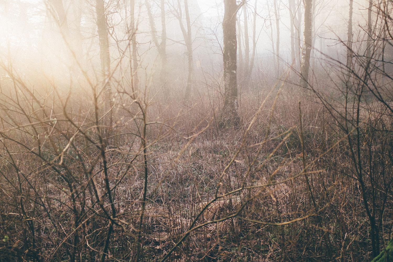 fog stavanger gosen forest