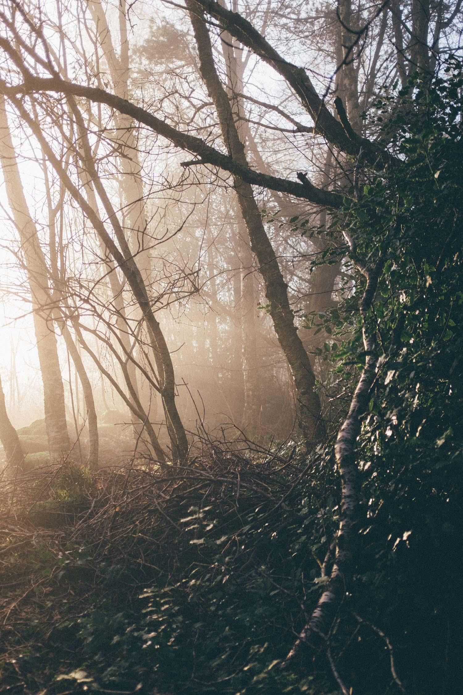stavanger norge fog sunset