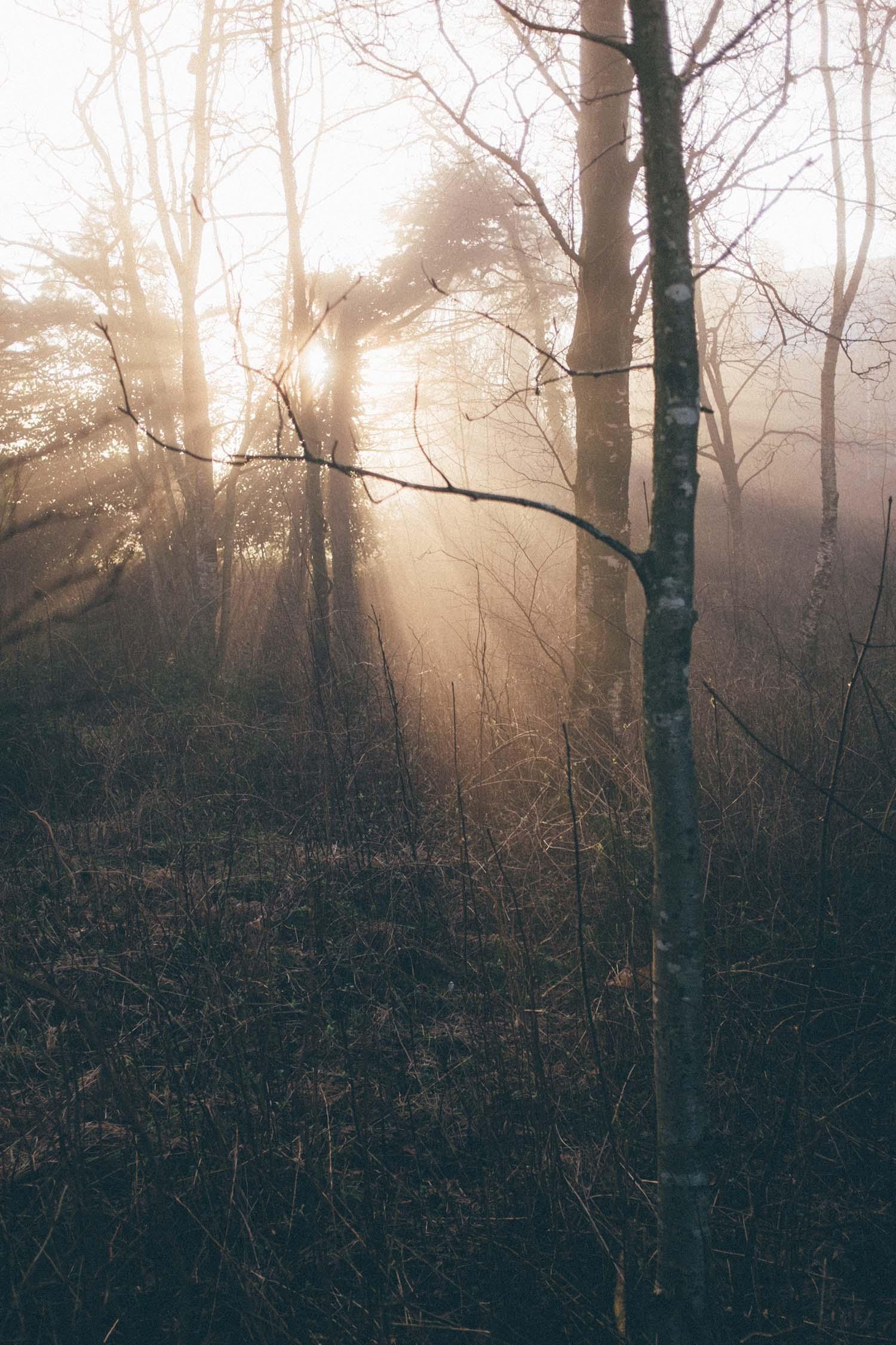 stavanger fog norge nature