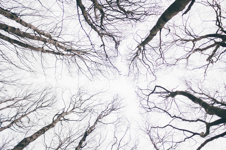forest nature stavanger