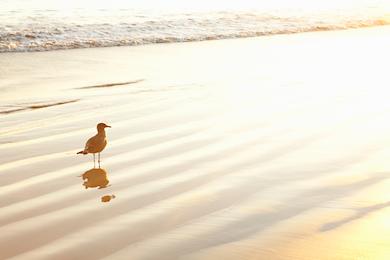 Beach 274