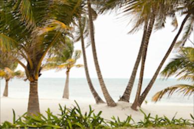 Beach 345