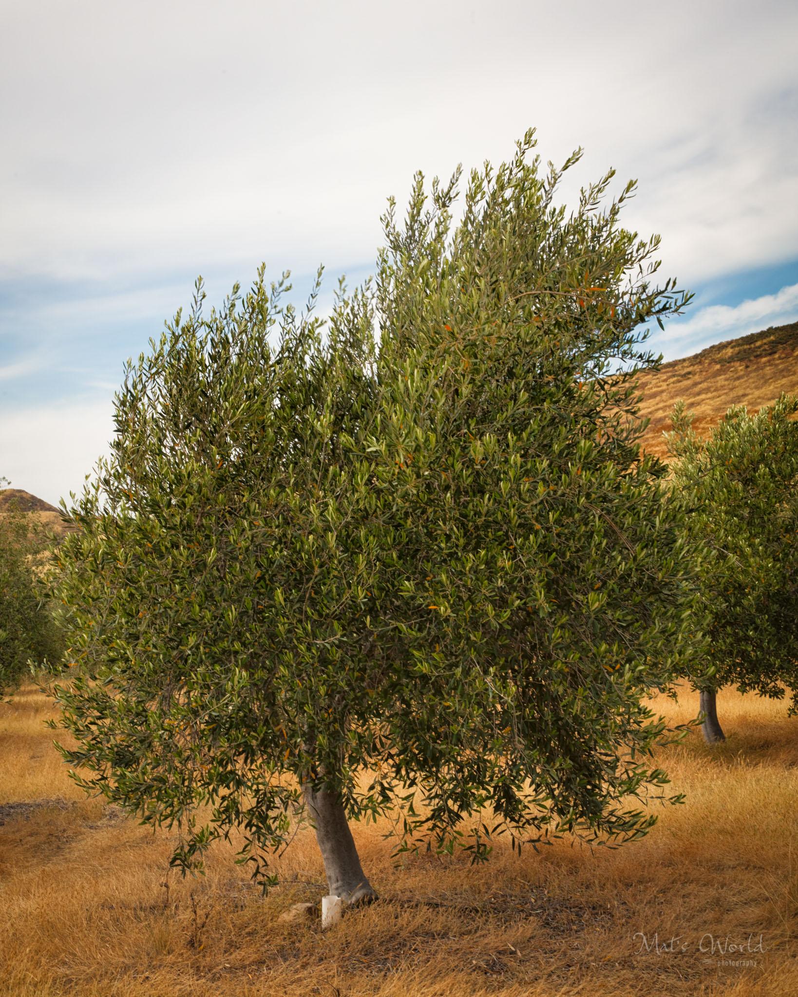 Singletree (1 of 1)-2.jpg