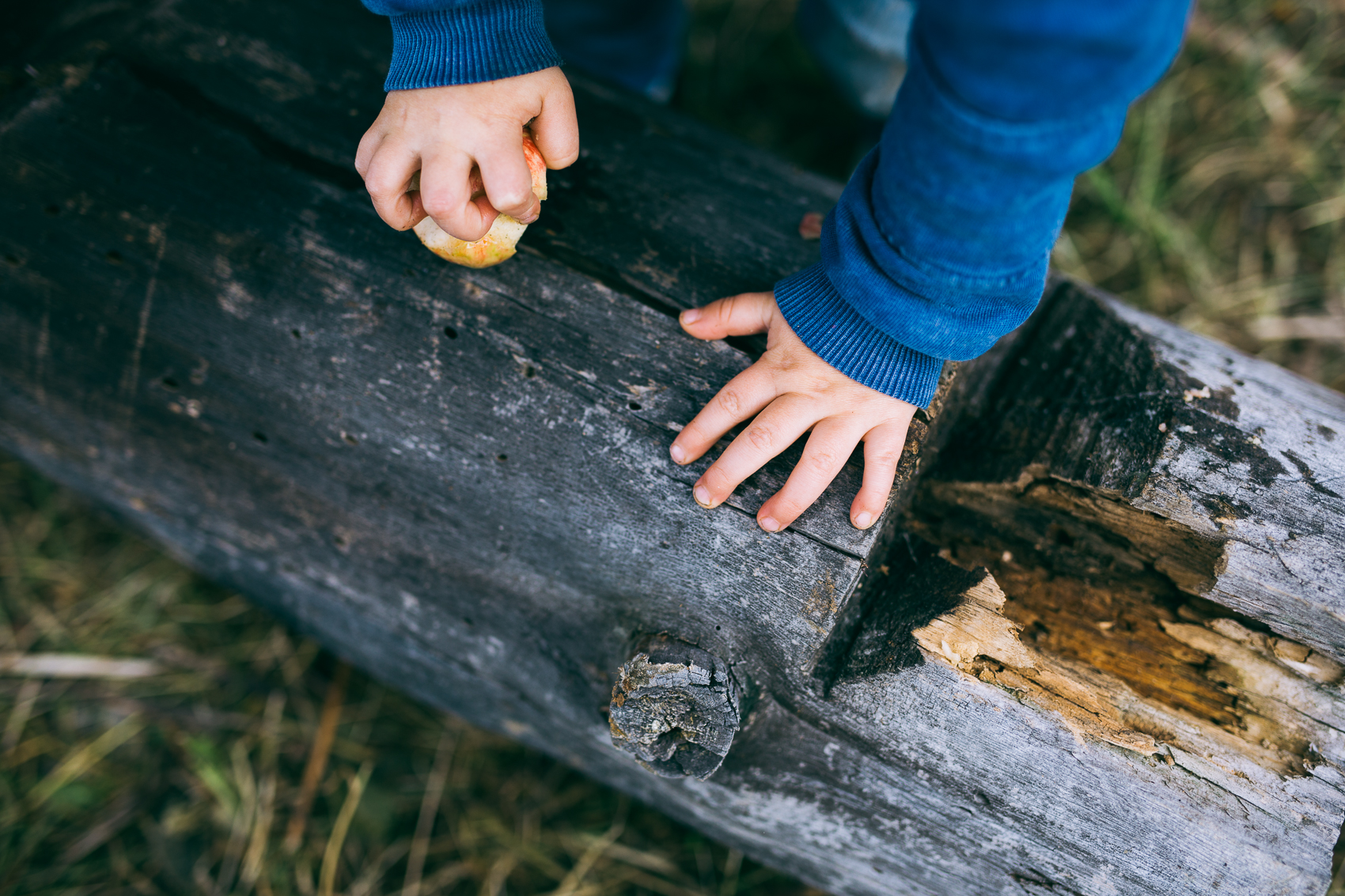 Natural Props in Family Sessions -