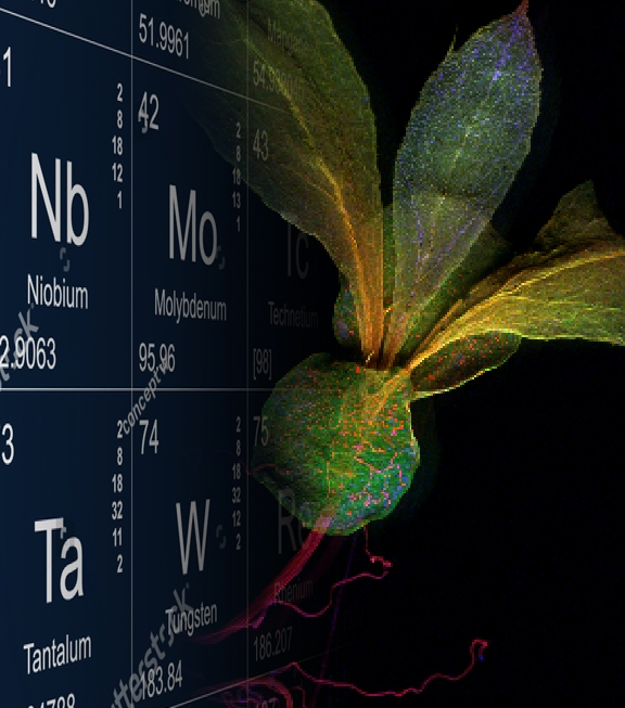 Life Sciences - Our high sensitivity, high resolution solutions can provide insight and correlative capabilities to fully understand biological pathways. Applications include cellular-scale metallomics research on the distribution of trace nutrients and nanoparticles in pathological tissue and plants.