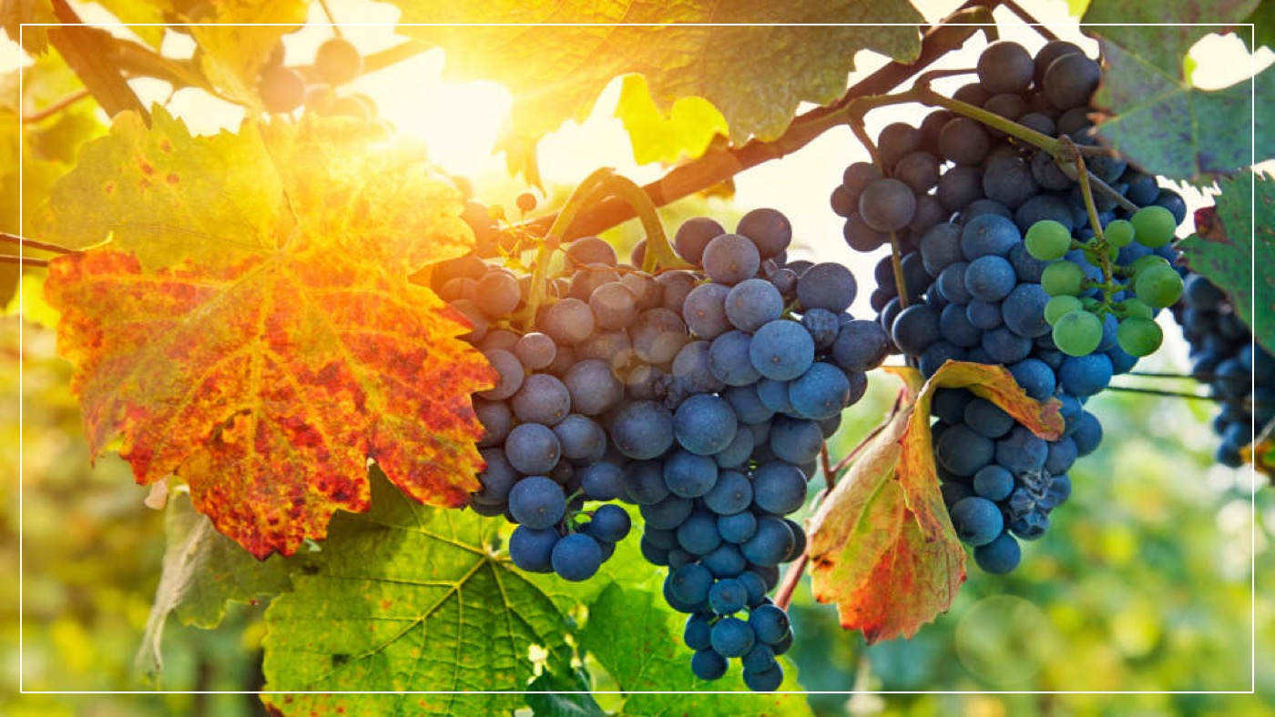 - Leaves ... or Fruit?John 15:1-11Paul MelanconJuly 29, 2018