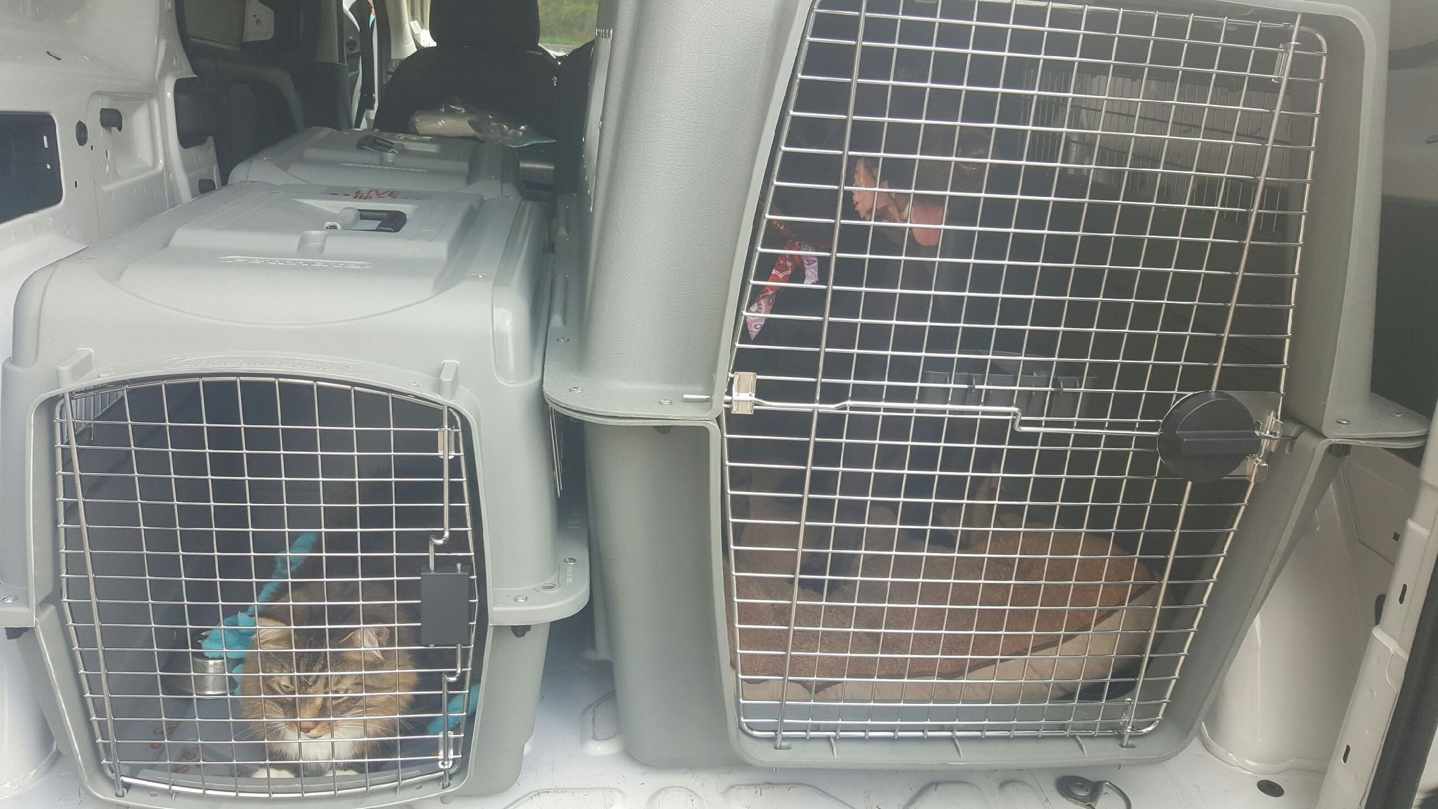 Unhappy Animals in the SWURV