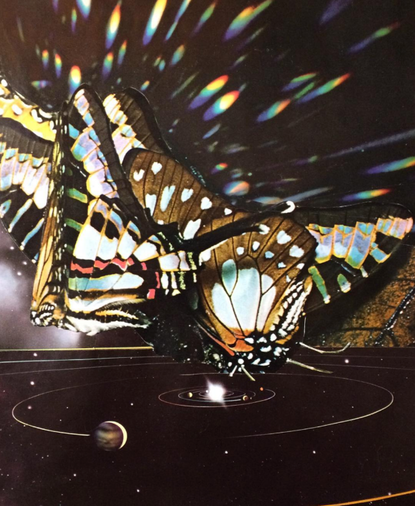 Chrysalis then butterfly. Exploding into form. Then back to the beginning.  By Janna Dorothy