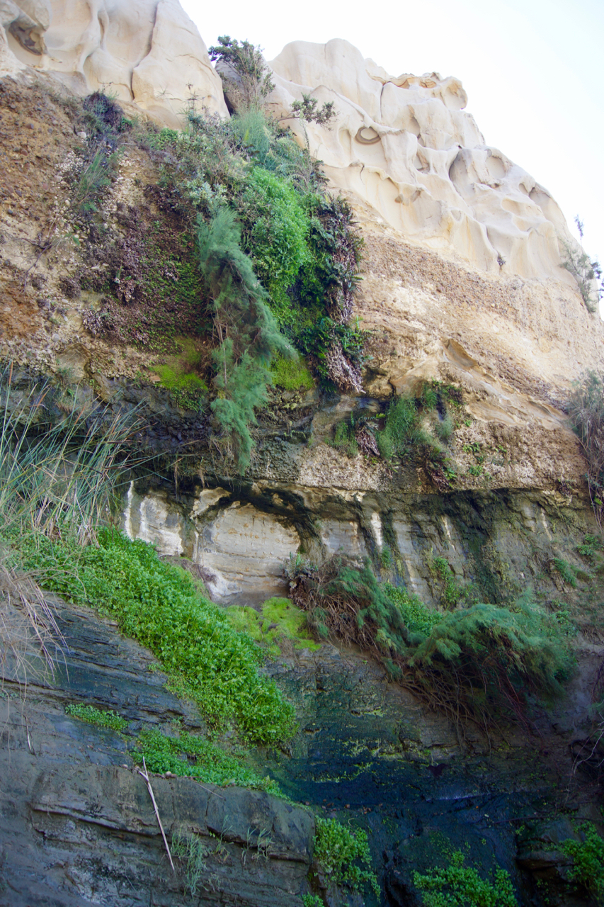 An unexpected lush patch, created by water trickling down the cliffs.