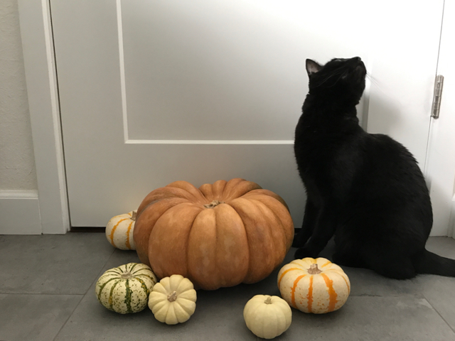 halloween - 15.jpg