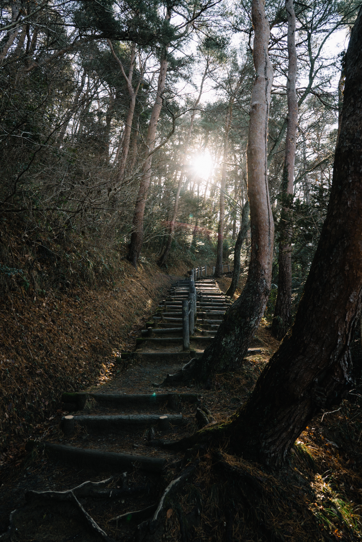 Tohoku-20180117-195833.jpg